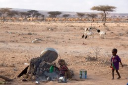 Camels walk past a camp for displaced people in a drought ravaged area of Somalia